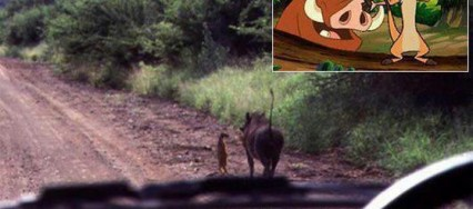 TIMON ET PUMBA EN VRAI